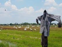 Schattenbild einer Vogelscheuche auf einem Feld Lizenzfreies Stockfoto