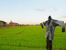 Schattenbild einer Vogelscheuche auf einem Feld Lizenzfreie Stockfotos