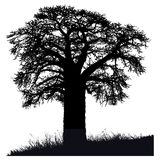 Schattenbild eines Baobabbaums Stockfotos