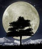 Schattenbild eines Baums gegen den großen Mond vektor abbildung