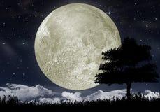 Schattenbild eines Baums gegen den großen Mond stock abbildung