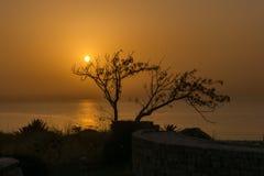 Schattenbild eines Baums gegen den Ozean bei Sonnenuntergang stockbild