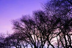Schattenbild eines Baums während des Sonnenaufgangs Stockfoto