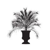 Schattenbild eines Dattelpalmebaums in einem Vase Stockfotos