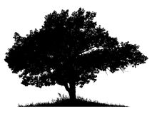 Schattenbild eines einsamen Baums Lizenzfreie Stockbilder