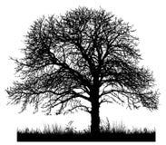 Schattenbild eines einsamen Baums Stockfotos