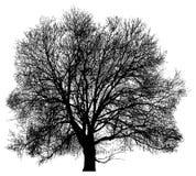 Schattenbild eines einsamen Baums Stockfoto