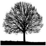 Schattenbild eines einsamen Baums Lizenzfreie Stockfotografie