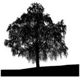 Schattenbild eines einsamen Baums Lizenzfreies Stockfoto