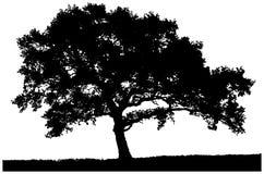 Schattenbild eines einsamen Baums Stockbild