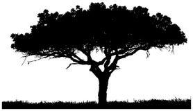 Schattenbild eines einsamen Baums Stockfotografie