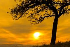 Schattenbild eines einzelnen Baums mit einer Feuerkugel lizenzfreie stockfotos