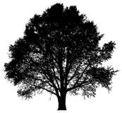 Schattenbild eines einzigen Baums Stockfotografie