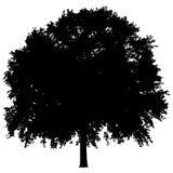 Schattenbild eines einzigen Baums Stockbild