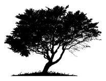 Schattenbild eines einzigen Baums Lizenzfreies Stockbild