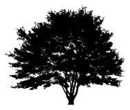 Schattenbild eines einzigen Baums Lizenzfreie Stockbilder