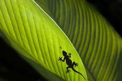 Schattenbild eines Gecko und der Fliege auf einem Blatt Stockbild