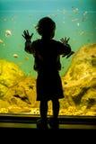 Schattenbild eines Jungen, der Fische betrachtet Stockfotos