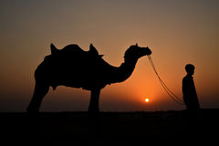 Schattenbild eines Jungen und des Kamels bei Sonnenuntergang Stockbild