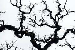 Schattenbild eines keines Laubbaums lokalisiert auf weißem Himmel Lizenzfreie Stockfotos