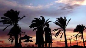 Schattenbild eines liebevollen Paares unter der Palme an der Sonnenuntergang-Umarmung und dem Kuss stock video