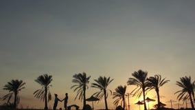 Schattenbild eines liebevollen Paares unter der Palme an der Sonnenuntergang-Umarmung und dem Kuss stock footage