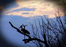 Schattenbild eines Marabustorchs hockte in einem skelettartigen Baum an der Dämmerung mit einem Vignettenrand, Süd-luangwa Nation Lizenzfreie Stockbilder