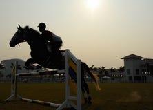 Schattenbild eines Pferds Lizenzfreie Stockbilder