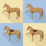 Schattenbild eines Pferds Lizenzfreie Stockfotos