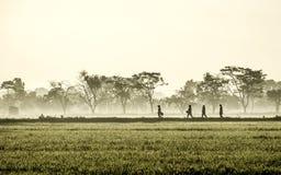 Schattenbild einiger Leute, die mitten in beträchtlichem Reisfeld gehen Lizenzfreies Stockbild