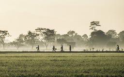 Schattenbild einiger Leute, die mitten in beträchtlichem Reisfeld gehen Lizenzfreies Stockfoto