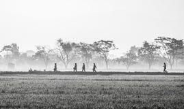 Schattenbild einiger Leute, die mitten in beträchtlichem Reisfeld gehen Lizenzfreie Stockfotos