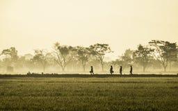 Schattenbild einiger Leute, die mitten in beträchtlichem Reisfeld gehen Lizenzfreie Stockfotografie