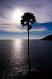 Schattenbild-einsame Palme Stockfoto