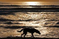 Schattenbild-einsamer Hundegehendes Sonnenaufgang-Meer Lizenzfreies Stockfoto