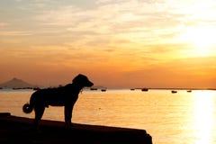Schattenbild-einsamer Hundestehendes Sonnenaufgang-Meer Stockfoto