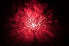 Schattenbild furchtsamen Halloween-Baums mit Horrorgesicht auf dunklem nebeligem getontem Hintergrund mit Mond auf Rückseite Furc lizenzfreies stockfoto