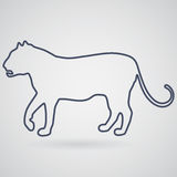 Schattenbild, gehender Tiger des Entwurfs mit einem offenen Mund auf einem grauen b Stockbild