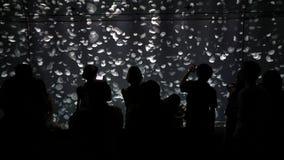 Schattenbild-Leute, die Fotos von Ohrenqualle-Gesamtlänge machen stock video