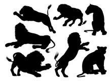 Schattenbild-Löwen Stockfotos