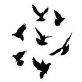 Schattenbild mit sieben Tauben Stockfotografie