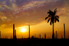 Schattenbild-Palmengarten mit Sonnenuntergang Lizenzfreie Stockbilder
