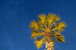 Schattenbild plam Baum am KOH yao.SongKhla Stockfotografie