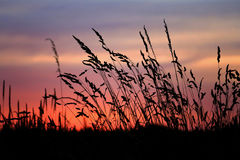 Schattenbild-Sonnenuntergang Stockfotos