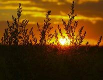 Schattenbild von Anlagen am Sonnenunterganghintergrund Lizenzfreie Stockfotos