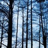Schattenbild von Bäumen Stockfotos