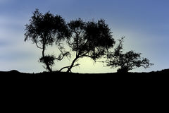 Schattenbild von Bäumen Lizenzfreie Stockfotografie