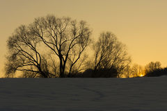 Schattenbild von Bäumen stockbild