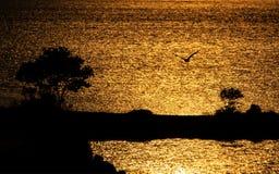 Schattenbild von Bäumen und von Möven bei Sonnenaufgang stockfotografie