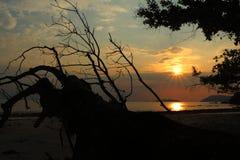 Schattenbild von Bäumen und von Sonnenuntergang auf Meer Stockfotografie